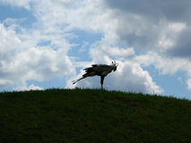 Άγριο πουλί μοναξιάς Στοκ φωτογραφίες με δικαίωμα ελεύθερης χρήσης