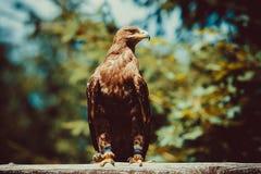 Άγριο πουλί Στοκ Εικόνες