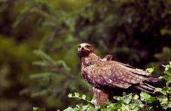 Άγριο πουλί Στοκ Φωτογραφίες