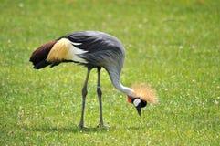 Άγριο πουλί Στοκ φωτογραφία με δικαίωμα ελεύθερης χρήσης