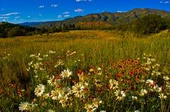Άγριο τοπίο βουνών λιβαδιών χλόης λουλουδιών της Aspen Στοκ Εικόνες