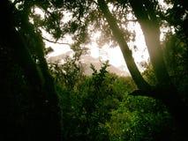 Άγριο τροπικό δάσος στα βουνά των Άνδεων Περού τρισδιάστατος νότος τρία απεικόνισης αριθμού της Αμερικής όμορφος διαστατικός πολύ Στοκ Φωτογραφίες