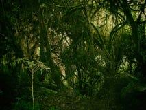 Άγριο τροπικό δάσος στα βουνά των Άνδεων Περού τρισδιάστατος νότος τρία απεικόνισης αριθμού της Αμερικής όμορφος διαστατικός πολύ Στοκ Φωτογραφία