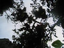 Άγριο τροπικό δάσος στα βουνά των Άνδεων Περού τρισδιάστατος νότος τρία απεικόνισης αριθμού της Αμερικής όμορφος διαστατικός πολύ Στοκ φωτογραφίες με δικαίωμα ελεύθερης χρήσης