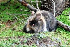 Άγριο Bunny Στοκ φωτογραφία με δικαίωμα ελεύθερης χρήσης