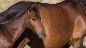 Άγριο Foal άλογο Στοκ εικόνα με δικαίωμα ελεύθερης χρήσης