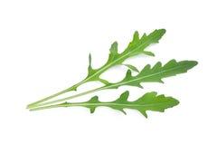 Άγριο leavesArugula πυραύλων που απομονώνεται στο λευκό Στοκ Εικόνες
