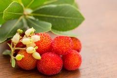 Άγριο medronho - arbutus- χαρακτηριστικά φρούτα από την Πορτογαλία Στοκ Εικόνες