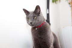 Άγρυπνη γάτα Στοκ εικόνες με δικαίωμα ελεύθερης χρήσης