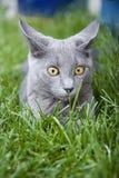 άγρυπνο γατάκι Στοκ εικόνα με δικαίωμα ελεύθερης χρήσης