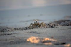 Άγρυπνο καβούρι φαντασμάτων στις άμμους Στοκ Φωτογραφία