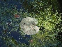 Άδεια νερού στοκ φωτογραφία με δικαίωμα ελεύθερης χρήσης