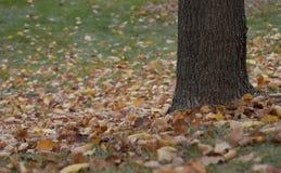 Άδεια φθινοπώρου πεσμένος κάτω από ένα δέντρο στη χλόη Στοκ εικόνες με δικαίωμα ελεύθερης χρήσης