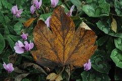 Άδεια φθινοπώρου στοκ φωτογραφίες με δικαίωμα ελεύθερης χρήσης