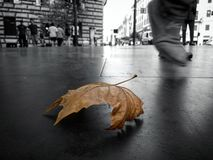 Άδεια φθινοπώρου στοκ εικόνα με δικαίωμα ελεύθερης χρήσης
