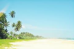 Άθικτη τροπική παραλία στη Σρι Λάνκα Όμορφη παραλία με καμία, τους φοίνικες και τη χρυσή άμμο μπλε θάλασσα Θερινή ανασκόπηση Στοκ εικόνα με δικαίωμα ελεύθερης χρήσης