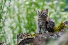 Άθλιο περιπλανώμενο γατάκι Στοκ Εικόνες