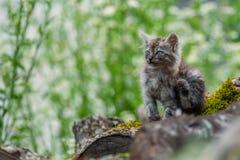 Άθλιο περιπλανώμενο γατάκι Στοκ φωτογραφίες με δικαίωμα ελεύθερης χρήσης