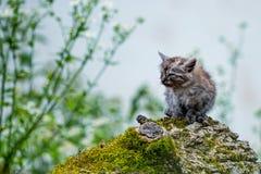 Άθλιο περιπλανώμενο γατάκι Στοκ εικόνα με δικαίωμα ελεύθερης χρήσης