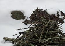 Άκρα περικοπών το χειμώνα στοκ εικόνα με δικαίωμα ελεύθερης χρήσης