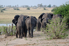 Άκρες ελεφάντων Στοκ Φωτογραφίες