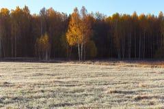 Άκρη του τομέα και παγωμένης της δάσος χλόης στον τομέα στον παγετό στοκ εικόνες