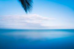 Άκρη του φύλλου φοινίκων που αγνοεί την ακτή στο Μεξικό Στοκ εικόνα με δικαίωμα ελεύθερης χρήσης