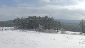 Άκρη του χιονισμένου δάσους το χειμώνα απόθεμα βίντεο