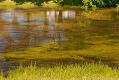 Άλγη και εργοστάσια νερού στο σαφές νερό στοκ εικόνα με δικαίωμα ελεύθερης χρήσης