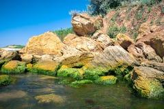Άλγη στις πέτρες θάλασσας Τα πράσινα άλγη καλύπτουν την επιφάνεια θάλασσας Στοκ εικόνες με δικαίωμα ελεύθερης χρήσης