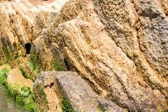 Άλγη στις πέτρες θάλασσας Τα πράσινα άλγη καλύπτουν την επιφάνεια θάλασσας Στοκ φωτογραφία με δικαίωμα ελεύθερης χρήσης