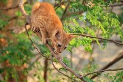 άλμα γατών έτοιμο στο δέντρο στοκ εικόνες