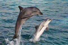 άλμα δελφινιών τόξων Στοκ Φωτογραφίες