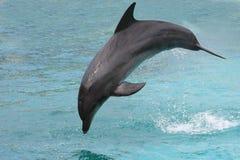 άλμα δελφινιών Στοκ Φωτογραφία