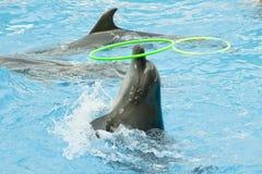Άλμα ενός δελφινιού Στοκ Εικόνες