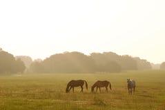 άλογα αυγής στοκ εικόνα