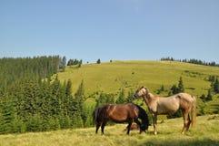 άλογα βουνοπλαγιών Στοκ φωτογραφίες με δικαίωμα ελεύθερης χρήσης