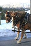 άλογα δύο σχεδίων που πε& στοκ εικόνα
