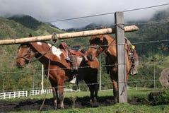 άλογα δύο Στοκ Φωτογραφίες