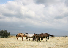 άλογα κοπαδιών Στοκ Εικόνες