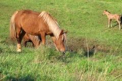 άλογα κοπαδιών Στοκ Φωτογραφία
