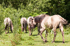 άλογα κοπαδιών Στοκ εικόνα με δικαίωμα ελεύθερης χρήσης