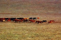 άλογα ομάδας λιβαδιών Στοκ Φωτογραφία
