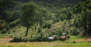 άλογα ομάδας Στοκ φωτογραφίες με δικαίωμα ελεύθερης χρήσης
