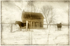 άλογα πεδίων Στοκ Εικόνες