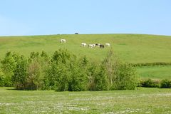 Άλογα που βόσκουν στο λόφο απόστασης Στοκ Εικόνα