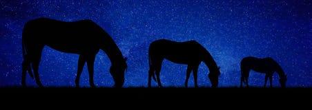 Άλογα που βόσκουν τη νύχτα αφαίρεση Στοκ εικόνες με δικαίωμα ελεύθερης χρήσης