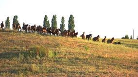 Άλογα που οργανώνονται στο χλοώδες λιβάδι στοκ φωτογραφίες με δικαίωμα ελεύθερης χρήσης