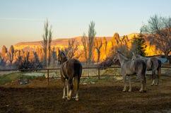 Άλογα που συλλογίζονται το τοπίο των δύσκολων βουνών Cappadocia, Τουρκία Στοκ φωτογραφία με δικαίωμα ελεύθερης χρήσης