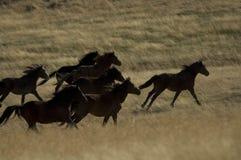 άλογα που τρέχουν τις άγρ&i Στοκ Φωτογραφίες